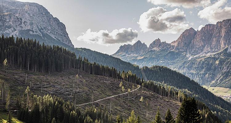 Alta Badia Boschi